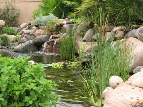 backyard  waterfeature